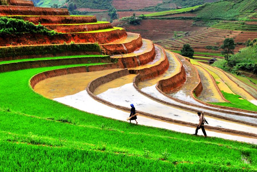 les rizières en terrasse à Sapa Vietnam