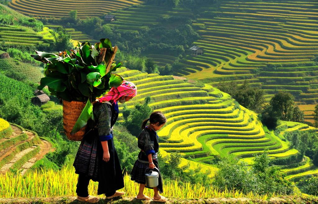 Sapa au Vietnam avec les rizières en terrasse